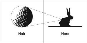 hair hare