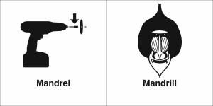 mandrel mandrill